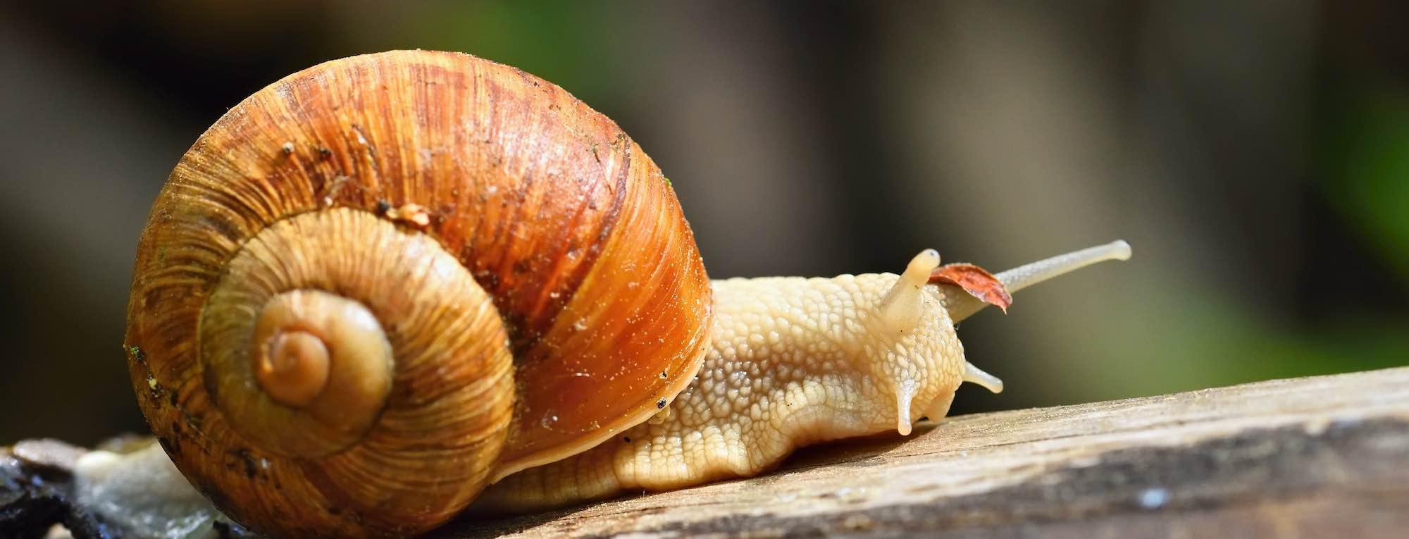 Gestión de requisitos de producto: ¿lenta o rápida?